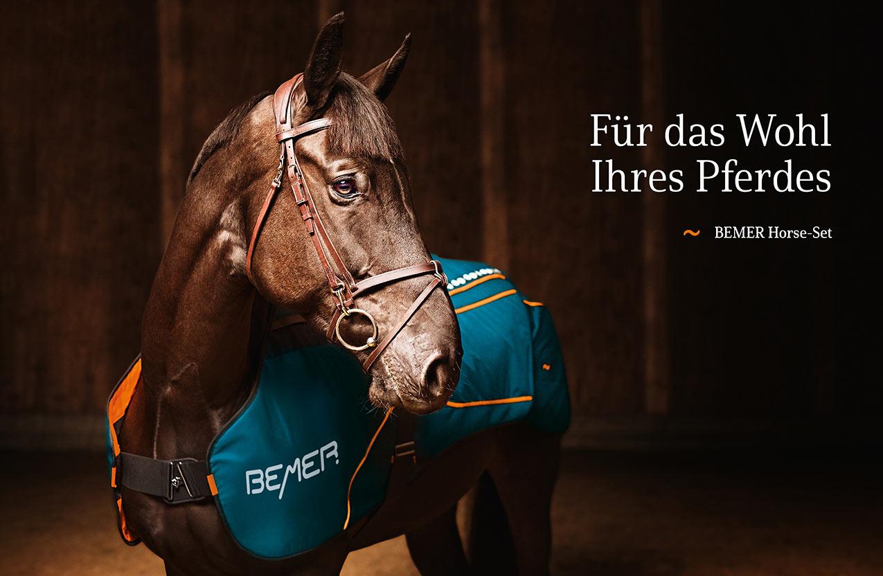 Gefäßtherapie für Pferde und andere Tiere